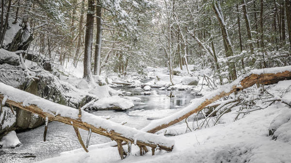 Photograph - Enders State Forest by Bill Wakeley