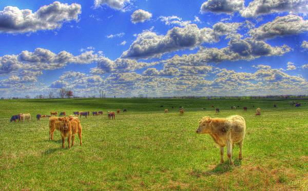 Photograph - Endless Cow 1 by Sam Davis Johnson