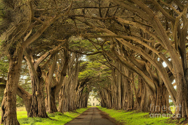 Photograph - Endless Cypress Tunnel by Adam Jewell
