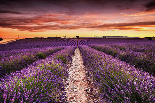 Photograph - Endless Fragrance by Jorge Maia