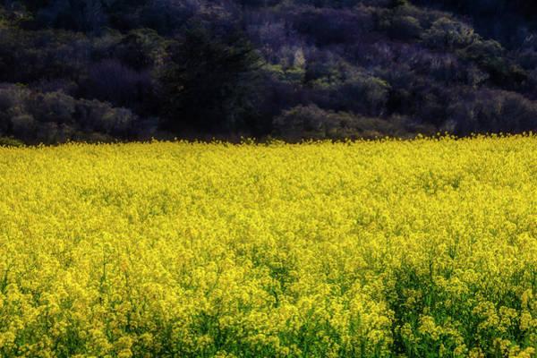 Wall Art - Photograph - Endless Mustard Grass by Garry Gay