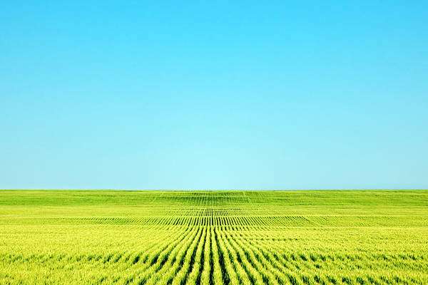 Big Sandy Photograph - Endless Rows Of Wheat by Todd Klassy