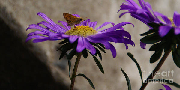 Photograph - Engaged In Purple by Linda Shafer