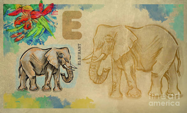 Drawing - English Alphabet , Elephant by Ariadna De Raadt