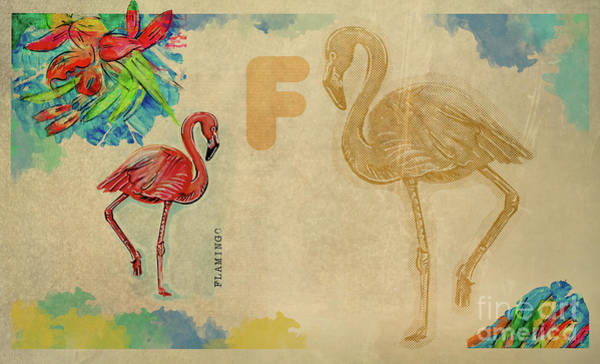Drawing - English Alphabet , Flamingo by Ariadna De Raadt