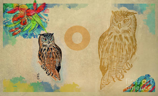 Drawing - English Alphabet , Owl by Ariadna De Raadt