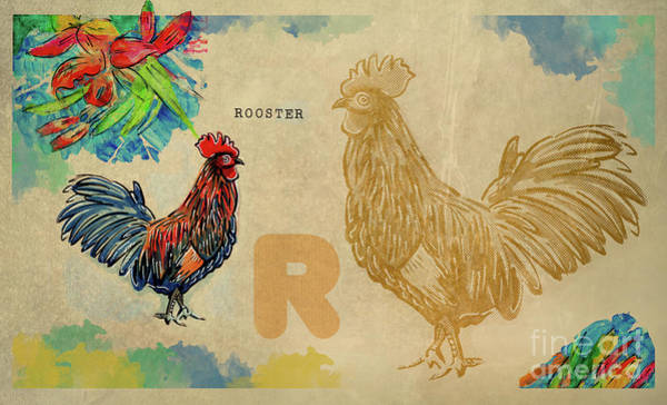 Drawing - English Alphabet , Rooster  by Ariadna De Raadt