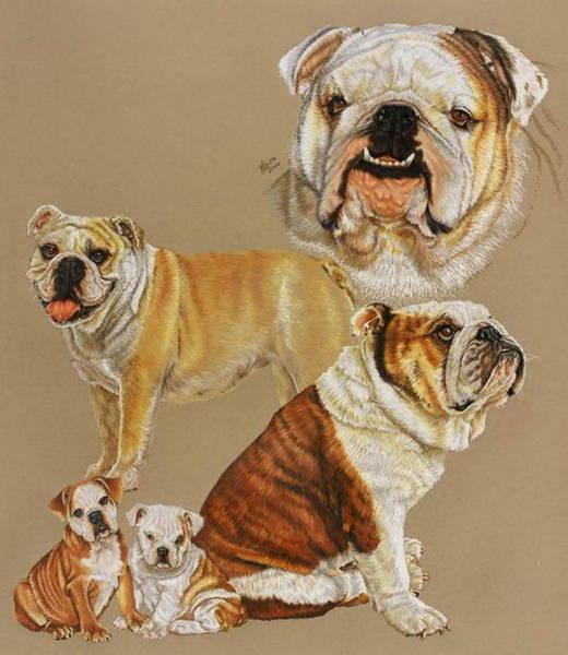 Drawing - English Bulldog by Barbara Keith