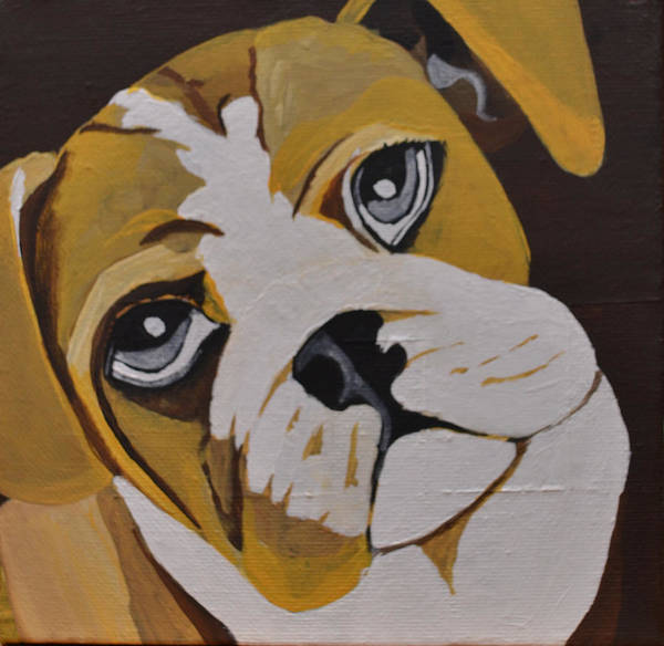 English Bulldog Painting - English Bulldog Painting by Heena Chow