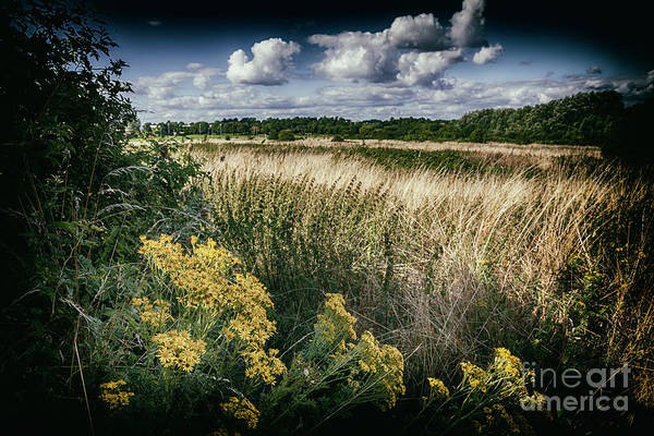 Photograph - English Country Side by Ariadna De Raadt