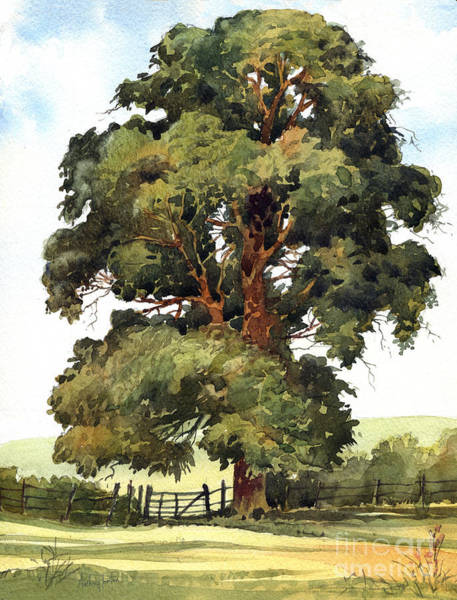 Wall Art - Painting - English Elm by Anthony Forster