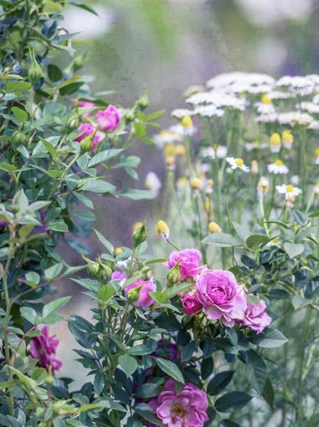 Photograph - English Garden by Jennifer Grossnickle