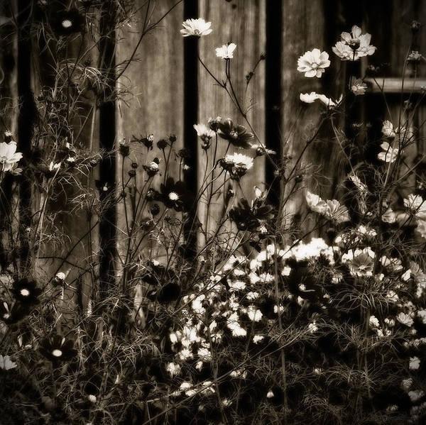 Photograph - English Garden Noir by Susan Maxwell Schmidt