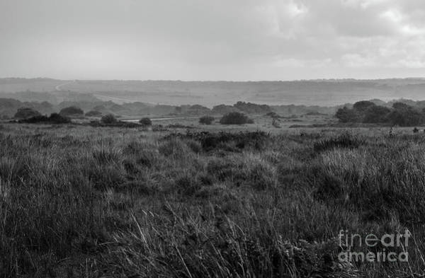 Photograph - English Heathland by Perry Rodriguez