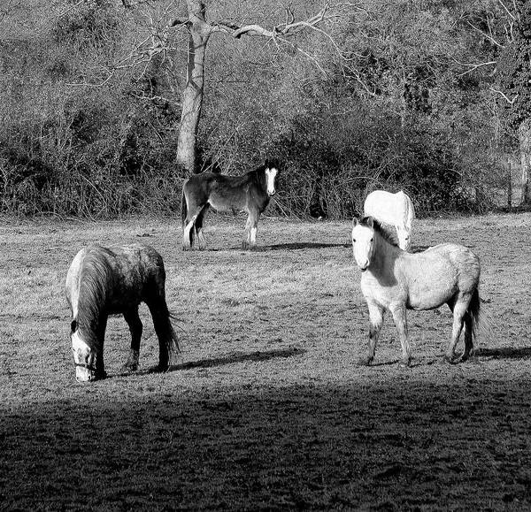 Photograph - English Horses by Jenny Mead