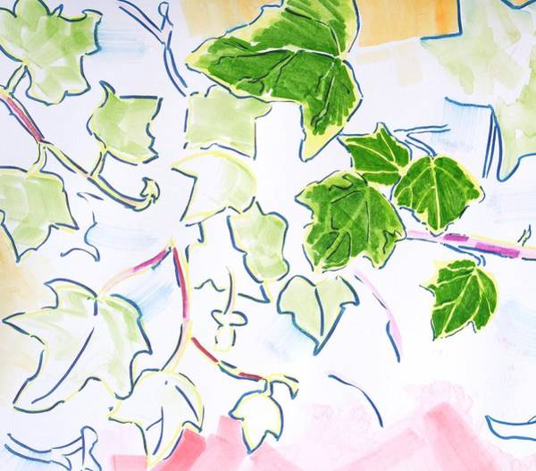 Painting - English Ivy Plant Illustration  by Mike Jory