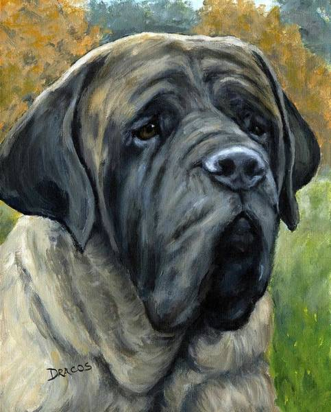 Bully Painting - English Mastiff Black Face by Dottie Dracos
