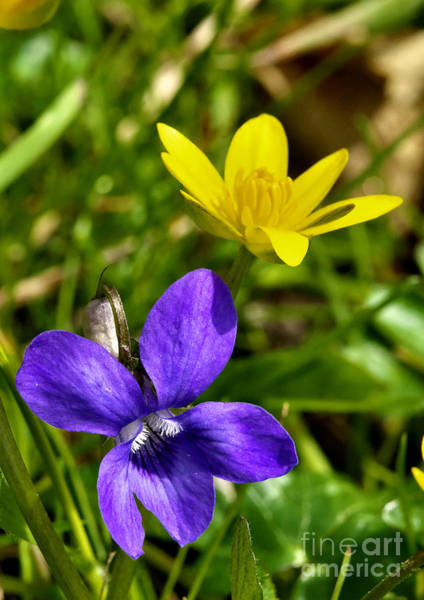 Photograph - English Spring Wild Flowers by Martyn Arnold