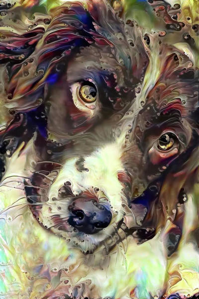Mixed Media - English Springer Spaniel Soulful Stare by Peggy Collins