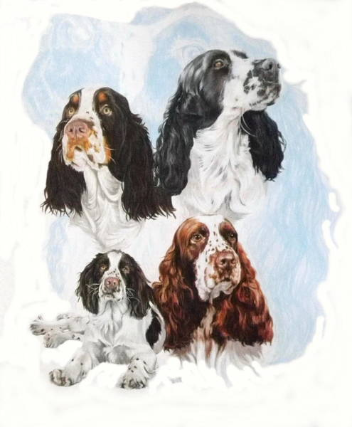 Mixed Media - English Springer Spaniel Medley by Barbara Keith