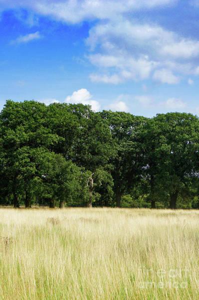 Wall Art - Photograph - English Woodland  by Tom Gowanlock