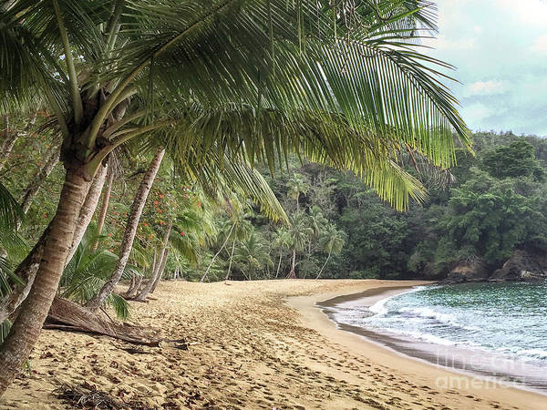 Photograph - Englishmans Bay Tobago by Rachel Lee Young