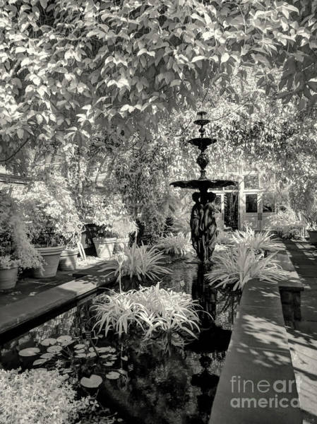 Photograph - Enid A. Haupt Conservatory by Jeff Breiman