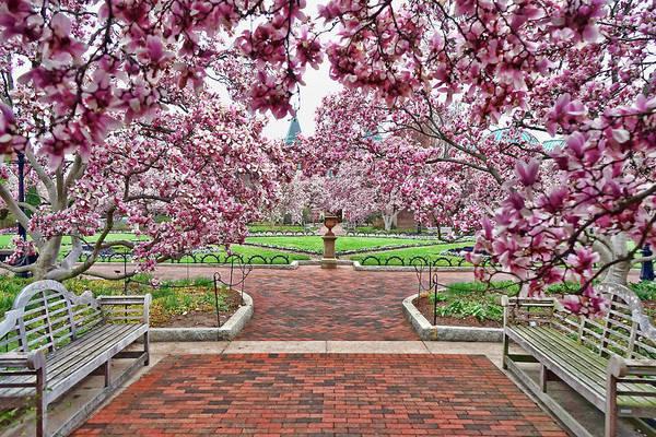 Photograph - Enid Haupt Garden, Washington, Dc by David Posey