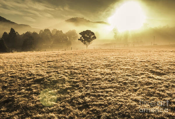 Photograph - Enigmatic Grassland by Jorgo Photography - Wall Art Gallery