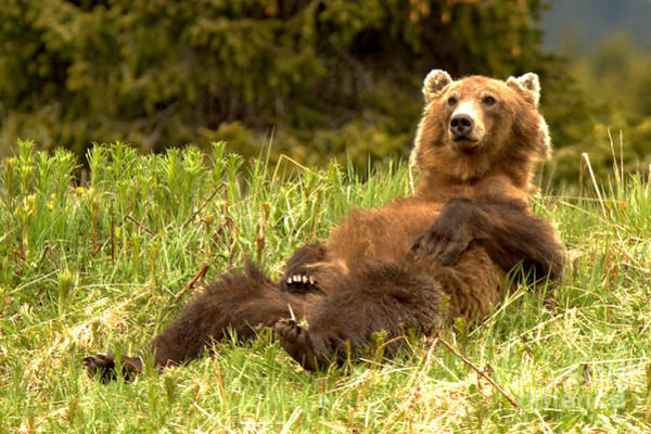 Photograph - Enjoying A Cool Spring Day At Banff by Adam Jewell