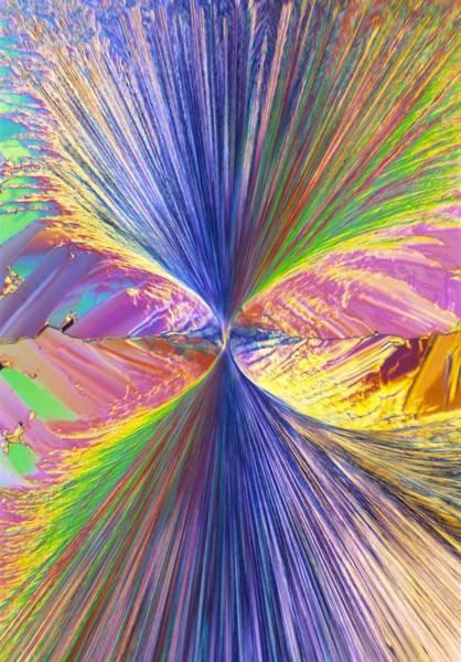 Wall Art - Photograph - Enkephalin Crystals, Light Micrograph by David Parker