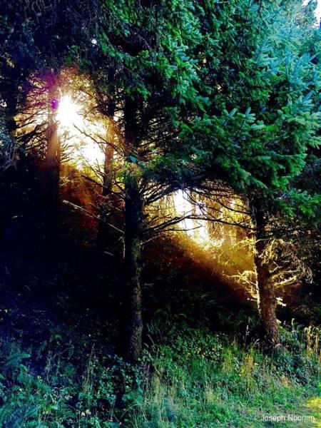 Photograph - Enlightenment by Joseph Noonan