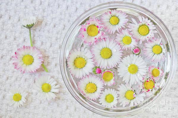 Wall Art - Photograph - Enslish Daisies In A Jar by Masako Metz