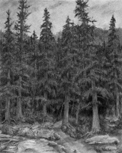 Evergreen Trees Drawing - Enter The Forest by David King