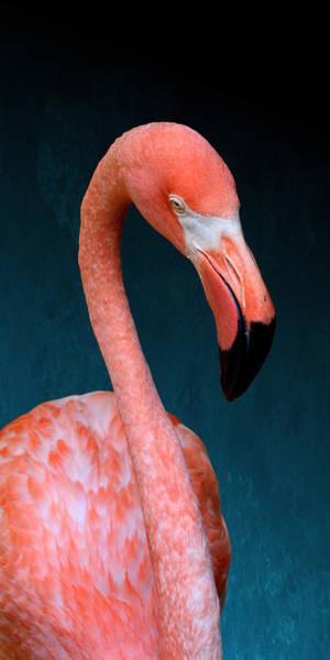 Photograph - Entirely Unimpressed Flamingo by Debi Dalio