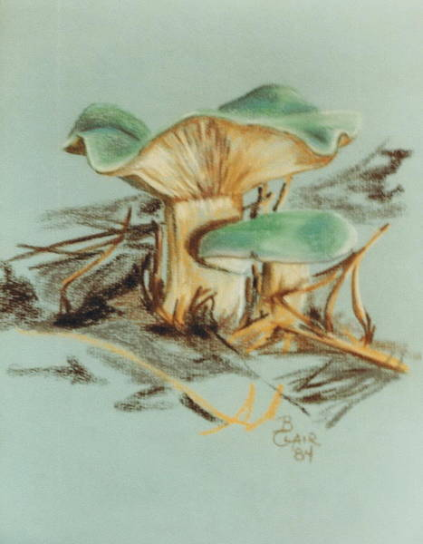 Pastel - Entoloma Incanum Green by Barbara Keith