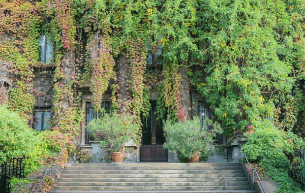Photograph - Entrance Way Covered In Vines by Alexandre Rotenberg