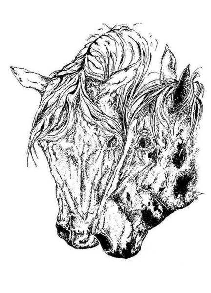 Appaloosa Drawing - Entwined by Audrey Tarlton
