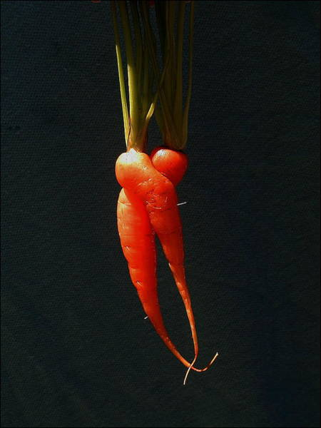 Wall Art - Photograph - Entwined Carrots by Mark Stevenson
