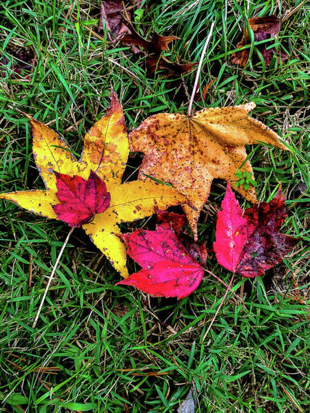 Photograph - Entwined In Fall by Jeff Kurtz