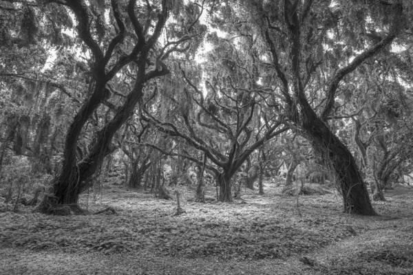 Photograph - Enveloping Timber by Jon Glaser