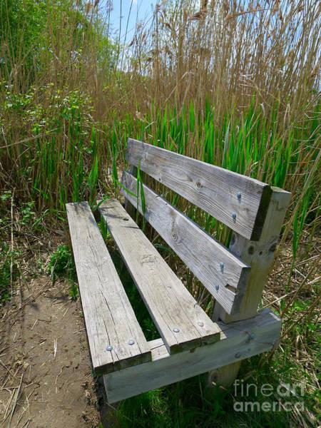 Livonia Photograph - Environmentally Friendly Seating by Ann Horn