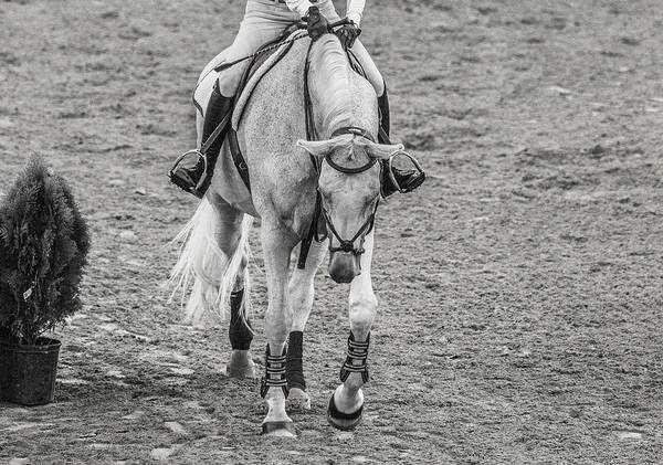 Wall Art - Photograph - Equestrian Graceful Gray by Betsy Knapp