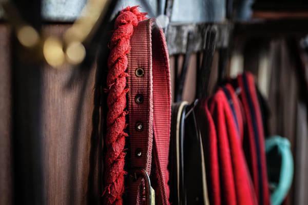 Equestrian Photograph - Equestrian Life by Samuel Whitton