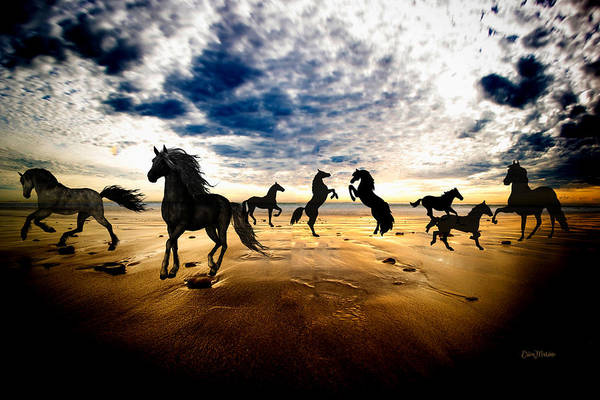 Photograph - Equine Beach by Ericamaxine Price