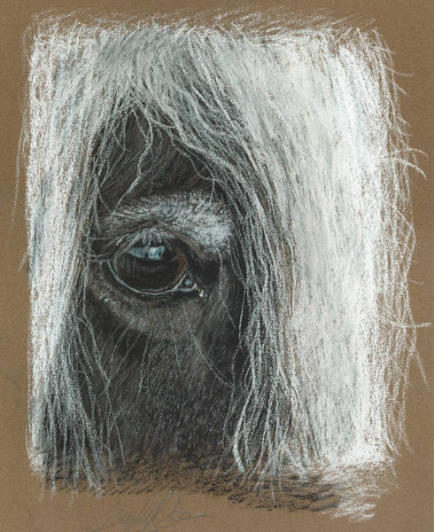 Pastel - Equine Eye Detail by Terry Kirkland Cook