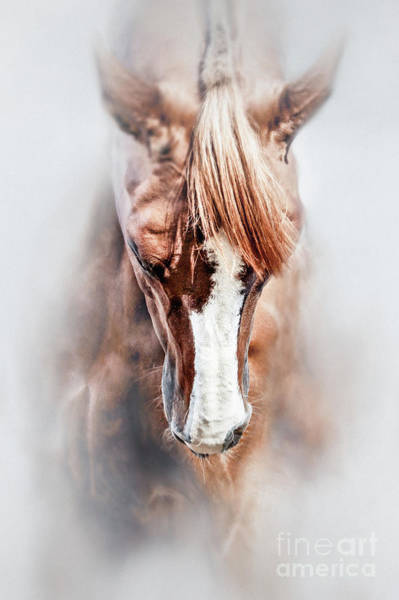 Photograph - Equine Portrait Beautiful Thoroughbred Horse Head by Dimitar Hristov