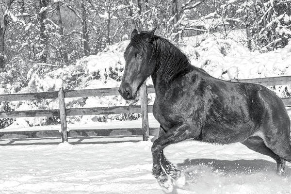 Wall Art - Photograph - Equine Snowy Winter Country by Betsy Knapp