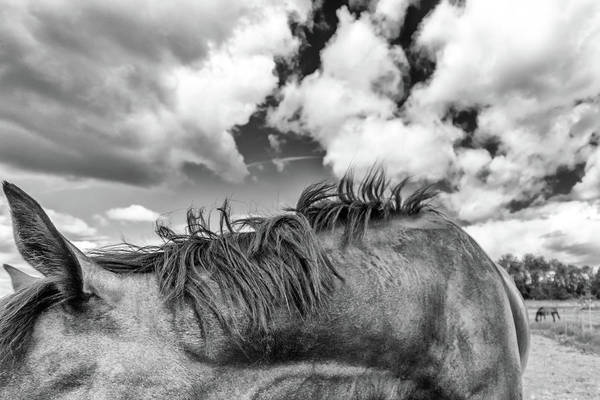 Wall Art - Photograph - Equine by Stelios Kleanthous