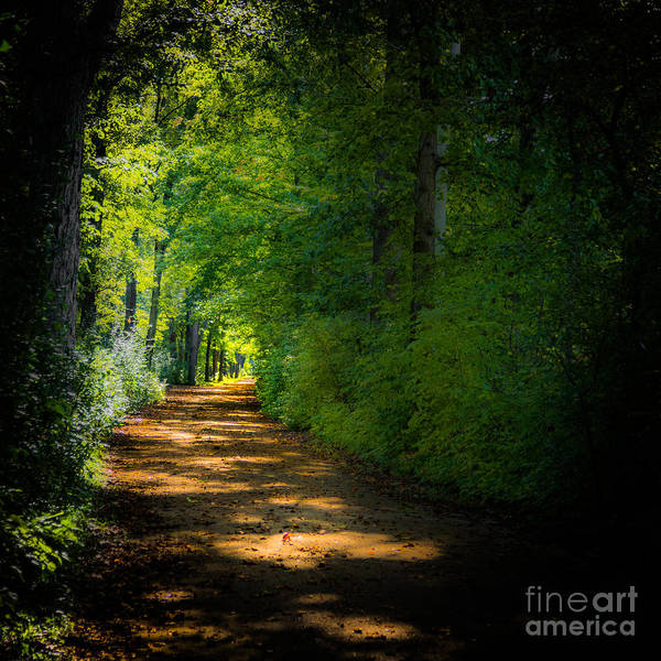 Photograph - Erie Canal Towpath by Michael Arend